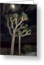 Moon Over Joshua - Joshua Tree National Park In California Greeting Card