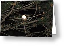 Moon Through Pines Greeting Card