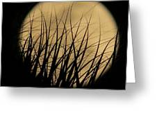 Moon Through The Palms Greeting Card