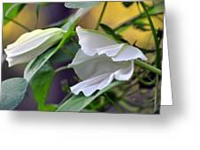 Moonflowers  Greeting Card