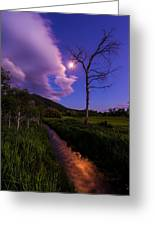 Moonlight Meadow Greeting Card by Chad Dutson