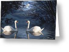 Moonlight Swim Greeting Card