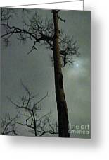 Moonlit Marks On A Ground Glass Canvas  Greeting Card