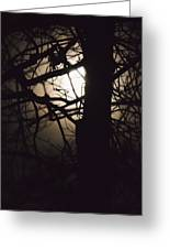 Moonlit Tree In The Forest Greeting Card