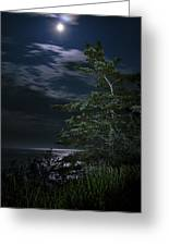 Moonlit Treescape Greeting Card