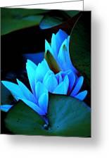 Moonlit Waterlilies Greeting Card