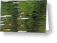 Moore State Park Lily Pond 2 Greeting Card