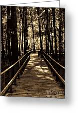 Moores Creek Battlefield  Nc Swam Bridge  Greeting Card