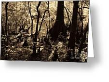 Moores Creek Swamp Greeting Card
