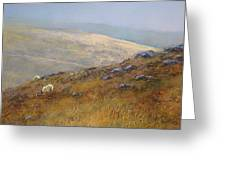 Moorland Sheep Greeting Card