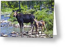 Moose And Baby 4 Greeting Card