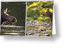 Moose And Baby 5 Greeting Card