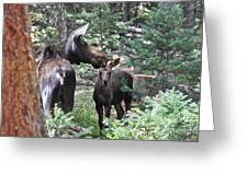 Moose And Her Calf Greeting Card