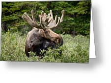 Moose Be Too Cool Greeting Card