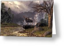 Moose In The Adirondacks Greeting Card