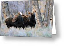 Moose Meeting Greeting Card