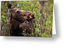 Moose Munch Greeting Card