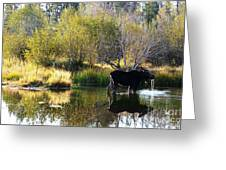 Moose Reflection Greeting Card