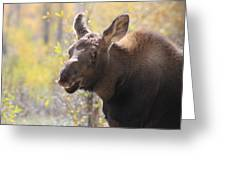 Moose Who Lost His Mother Greeting Card