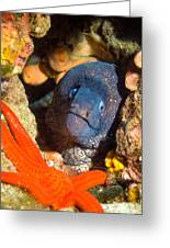 Moray And Starfish Greeting Card