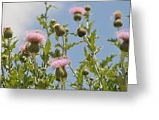 More Blooming Weeds Greeting Card