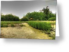More Of The Marshlands Greeting Card