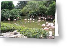 More Pink Flamingos Greeting Card