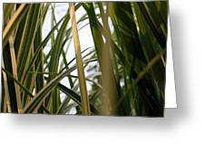 More Tall Grass Greeting Card
