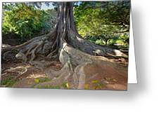 Moreton Bay Fig Tree From Jurrasic Park Greeting Card