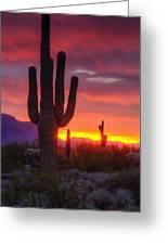Morning Arizona Style  Greeting Card