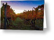 Morning At The Vineyard Greeting Card