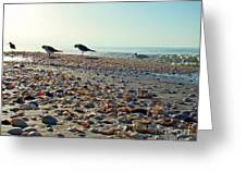 Morning Beach Preen Greeting Card