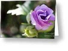 Morning Blossom Greeting Card