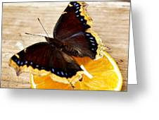 Morning Cloak Butterfly Greeting Card