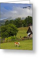 Morning Cow Greeting Card