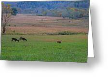 Morning Deer In Cades Cove Greeting Card