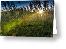 Morning Dew Greeting Card by Gerald Murray Photography