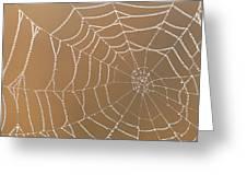 Morning Dew On Web Greeting Card