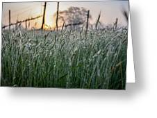 Morning Dew - View Through The Grass Greeting Card