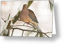 Morning Dove Greeting Card