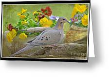 Morning Dove With Pansies Greeting Card