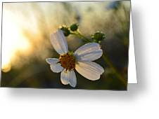 Morning Flower Greeting Card
