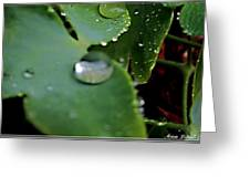 Morning Fresh Leaves With Droplets Greeting Card