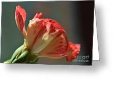 Morning Freshness Greeting Card
