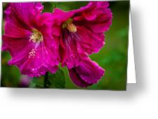 Hollyhocks By The Road Greeting Card