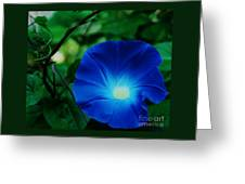 Morning Glory # 2 Greeting Card