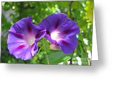 Morning Glory Couple Or 2 Purple Ipomeas Greeting Card