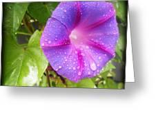 Morning Glory Tears Greeting Card