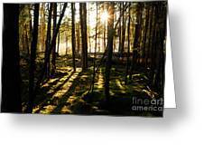 Morning In Canoe Country Greeting Card