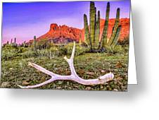Morning In Organ Pipe Cactus National Monument Greeting Card